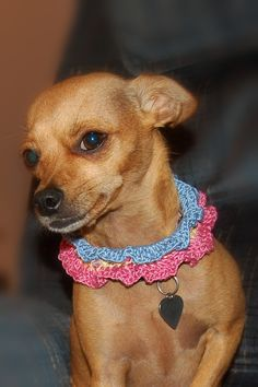 Ruffles and Beads Summer Dog Collar Crochet Pattern - free crochet pattern