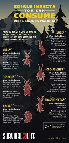 Edible Insects You Can Consume When Stuck In The WIld | https://survivallife.com/edible-insects/