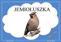 BLOG EDUKACYJNY DLA DZIECI Montessori, Birds, Blog, Education, Winter, Animals, Speech Language Therapy, Animales, Animaux