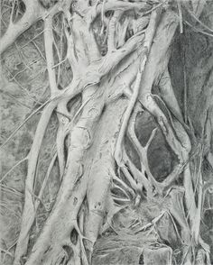 Pencil drawing - *Roots*; 28 x 35 cms.