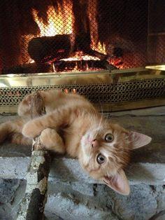 Orange cat on the hearth