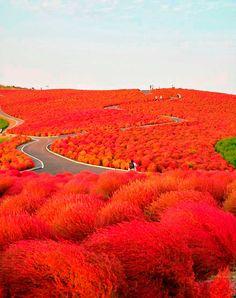 Parque Hitachi, Japan Por: nipomen2 | sename777