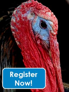 Meet a live turkey and win a frozen one at our Wild Turkey Family Scavenger Hunt! Free to play! Saturday, November 22, 2014, 10 AM, Dobbins Woods Preserve on Bly Hill Road in Ashville, NY | http://conta.cc/1vqlqIZ