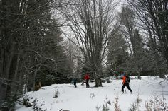 Munții Bucegi: Pasul Cota 1000-Vârful Păduchiosu-Platoul Bucegi Mountaineering, Snow, Outdoor, Outdoors, Climbing, Hill Walking, Outdoor Living, Garden, Eyes