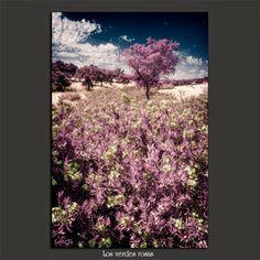 Meridiana claridad (Sofía Serra): Los verdes rosas