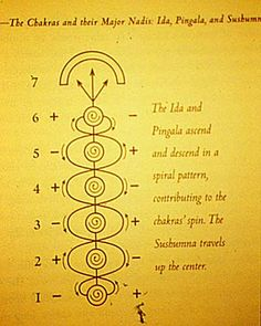 """The sushumna runs up and down the central axis of the body within the spine, between the crown (top of the head) and sacrum. The sushumna is also connected to all seven primary chakras via the """"stems,"""" which provides each chakra with this vital energy. Chakra Mantra, Chakra Meditation, Kundalini Yoga, Chakra Healing, Pranayama, Reiki Master, Yoga Inspiration, Yoga Philosophy, Indian Philosophy"""