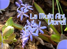 Felicitare de Florii cu mesajul La multi ani, Viorel! Plants, Google, Books, Happy Brithday, Libros, Book, Planters, Book Illustrations, Plant