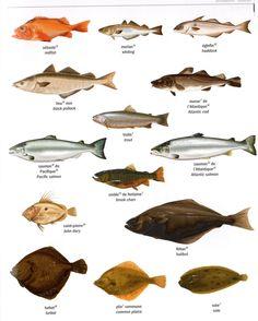 FLE/ Learning French- Fish/Poissons p2. Source: Dictionnaire Visuel/La Martinière.