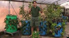 Verticle barrel gardening.