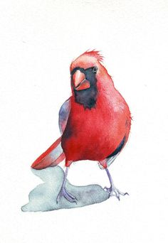 Cardinal Painting Print of watercolor painting 5 by Splodgepodge, $15.00