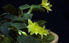 Resultado de imagem para orquídeas plantadas na terra