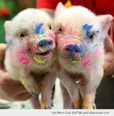 Pig pictures Animals Cute baby animals Cute pigs Micro pigs Baby pigs It Cute Baby Pigs, Cute Baby Animals, Smiling Animals, Farm Animals, Baby Piglets, Funny Animal Photos, Animal Pictures, Hilarious Photos, Funny Videos