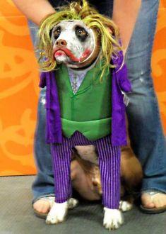 & Joker Xl   Dog Costumes   Pinterest   Costumes