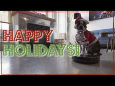 "A very tolerant and adorable Boston terrier named Five rides around the living room on a Roomba dressed as Santa with ""¿Dónde Está Santa Claus?"" by Augie Rios playing in the background. submitted v..."