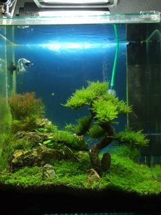 1000+ images about Aquascaping on Pinterest Planted aquarium ...