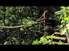 The Challenge: A Jungle Adventure!