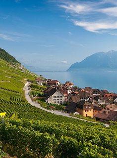 Epesses,Switzerland.