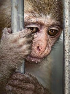 """""""Use your voice for those who don't have one."""" - Ricky Gervais. Please see his twitter account for access to many animal rescue programs, ideas and inspiration."""