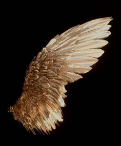 Read Chapter Four - Part 1 from the story The Bird and the Wolf by (Raven's Writing) with 90 reads. Black And Gold Aesthetic, Swan Wings, Photo Deco, Or Noir, Angel Aesthetic, Fairy Wings, Angels And Demons, Arte Pop, Angel Art