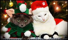weaknesses no. 3 and 4: christmas and cats. together = better.