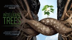 """Created by German forester Peter Wohlleben and forest ecologist Suzanne Simard, the film explores the underground network that allows trees to communicate. Peter Wohlleben, Trees Online, Bodhi Tree, Old Couples, Bird Tree, Documentary Film, Mother Earth, Bestselling Author, Videos"