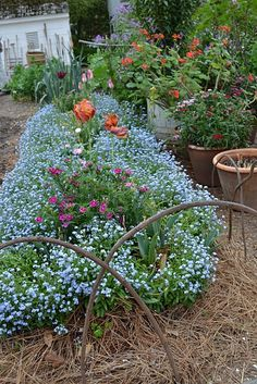 Beautifully Mulched Flower Bed In The Garden