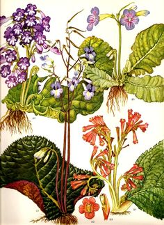 Vintage Botanical Print 1970 Color Art Wild Flowers Original