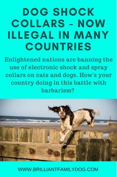 Dog Training Dog shock collars are becoming illegal in more and more countries! These gadgets are not only cruel but also harmful and can give you the exact opposite from what you wanted. Dog Training Books, Dog Training Courses, Dog Training Tips, Electronic Dog Collars, Stop Puppy From Biting, Reactive Dog, Medication For Dogs, Dog Shock Collar, Puppy House