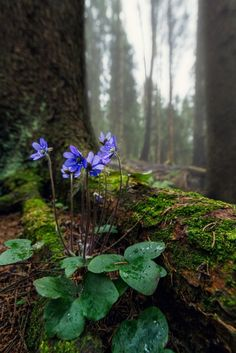 New nature forest flowers beautiful Ideas Forest Plants, Forest Flowers, Wild Flowers, Arrangements Ikebana, Spring Forest, Nature Aesthetic, Woodland Garden, Walk In The Woods, Shade Garden