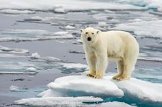 Save 25% - 50% on Arctic Summer voyages... BOOK NOW