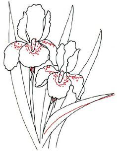 How To Draw An Iris In 5 Steps Iris Drawing Flower Drawing Flower Sketches