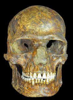 Foto del fòssil Kostenki. 37.000 anys d'antiguitat. Sapiens