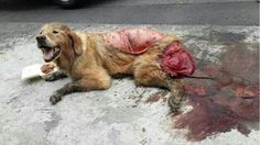 Sign this petition and make it STOP Thousands of dogs and cats are skinned alive and eaten every year for pet meat festivals. signatures on petition) Report Animal Abuse, Animal Testing, Animal Rescue, Horror, Stop Animal Cruelty, Save Animals, Animal Welfare, Animal Rights, Dog Cat