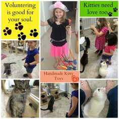 Kids can volunteer at a local cat shelter - Happy Tails in Sacramento