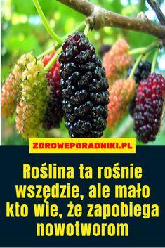 Permaculture, Ale, Fruit, Health, Trees, Gardening, Food, Gardens, Diet