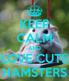 KEEP CALM AND LOVE CUTE HAMSTERS