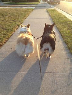 ❤  reminds me of Matt and Raschal, my two corgis. love them both.