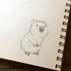 Warm up sketch. For you, Internet: a happy little (Those three worlds i. Warm up sketch. Cute Sketches, Animal Sketches, Animal Drawings, Cute Drawings, Cartoon Drawings, Painting & Drawing, Feather Wall Art, Quokka, Drawing Projects