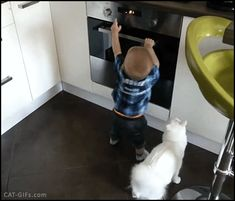 CAT GIF • Heroic and clever Cat protects little boy from the hot stove