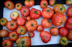 Tomatoes at Venice Beach Farmers Market | www.rachelphipps.com @rachelphipps