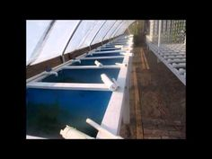 Aquaponics Greenhouse Tour, after four months - YouTube