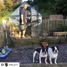 palramappsGreat setting for gardening with the Harmony 6x8 green greenhouse 🌱 keep growing! #PalramLifestyle #Repost @mrs.c11 with @repostapp ・・・ Everyone loving the garden, our work in progress :) #garden #greenhouse #palram #dogs #fruglife