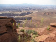 Park Family Insurance > Blog - Neat Shot of a Gigantic Chasm in Canyonlands National Park
