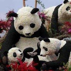 Pandas ### Rose Parade Photos