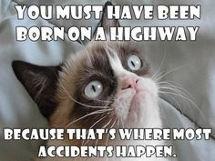 #GrumpyCat #meme For more Grumpy Cat stuff, gifts, and meme visit www.pinterest.com/erikakaisersot Grumpy Cat Quotes, Funny Grumpy Cat Memes, Cat Jokes, Funny Cats, Funny Memes, Cats Humor, Hilarious Quotes, Stupid Funny, Funny Animal Quotes