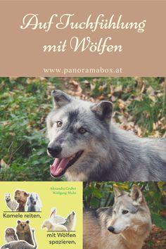 Im weltweit einzigartigen Wolfsforschungszentrum im niederösterreichischen Weinviertel können Besucher zu einem Rudel ins Gehege gehen oder einen Wolf bei einem Waldspaziergang begleiten. Wolf, Movies, Movie Posters, Animals, Art, Camels, Dance, Interesting Facts, Art Background