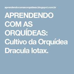 APRENDENDO COM AS ORQUÍDEAS: Cultivo da Orquídea Dracula lotax.
