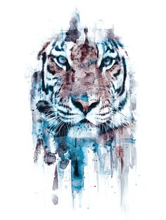 Poster | TIGER von Riza Peker | more posters at http://moreposter.de