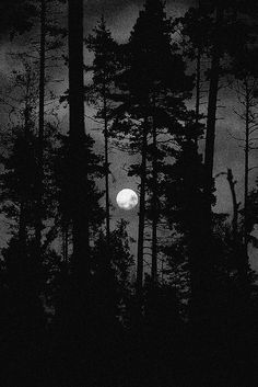 Dark forest, glow of the lake, an eternal dance of death Nocturne, Forest Photography, Nature Photography Tips, Ocean Photography, Wedding Photography, Night Forest, Night Aesthetic, Beautiful Nature Wallpaper, Forest Painting