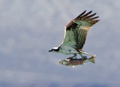 Flying fish...Baja - Above and Below http://bit.ly/JzHwhw